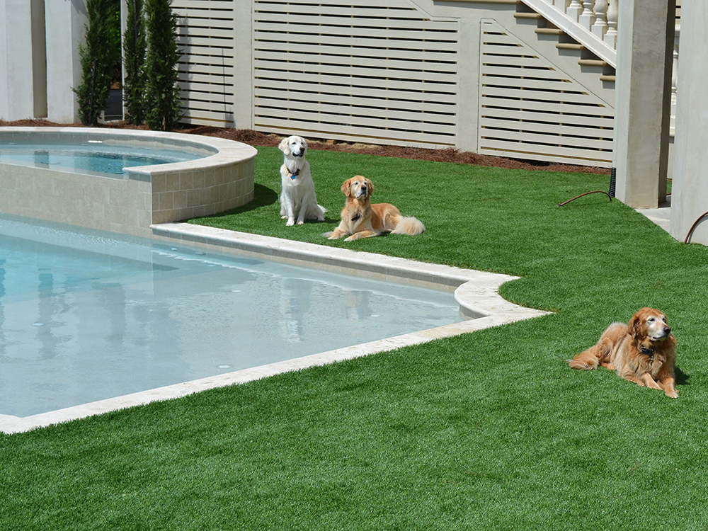 3-chilled-dogs-around-pool