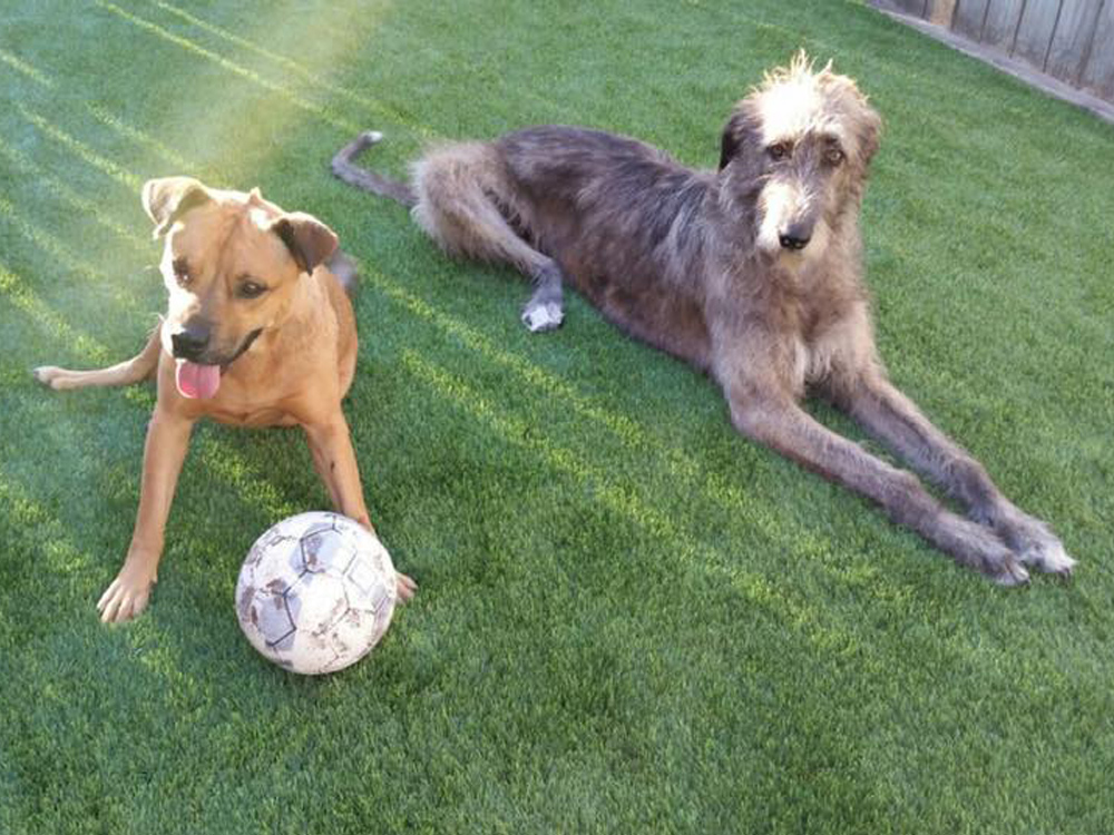 two-dogs-on-k9-turf