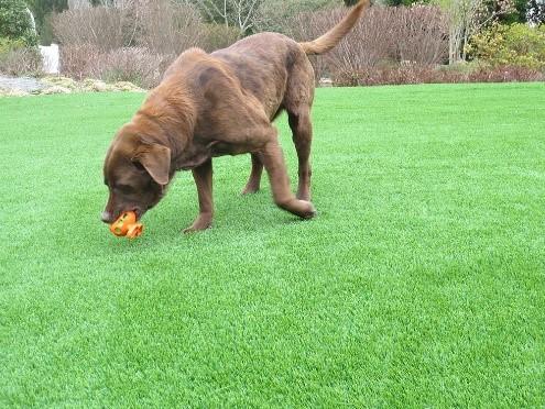 Is artificial grass a good buy?